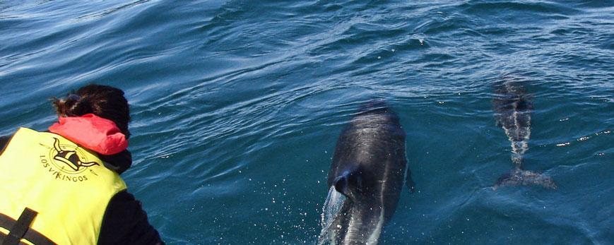 Australes-cerca.jpg