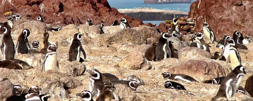 Vista panorámica de pingüinos en el faro